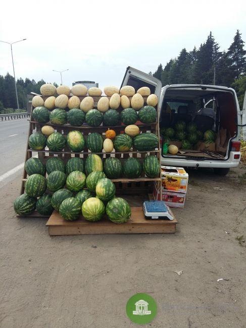 Россельхознадзор рекомендует не покупать арбузы возле дорог