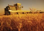 Лучший показатель в  сельскохозяйственной  истории Кировской области