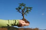 «Кировэнерго» будет сотрудничать с Департаментом лесного хозяйства Кировской области