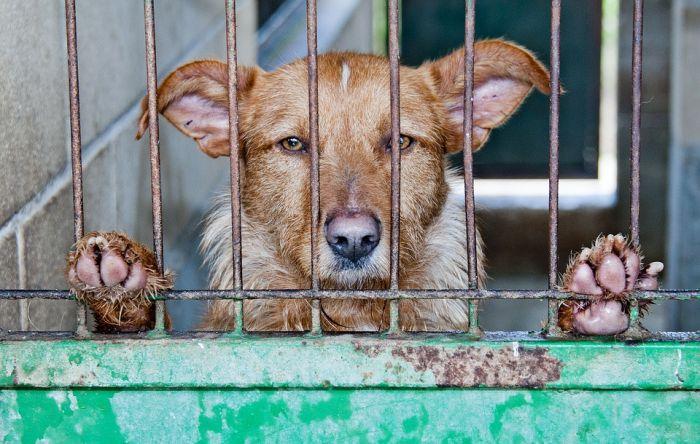 Кирвские защитники животных обратились в Госдуму из-за отлова собак
