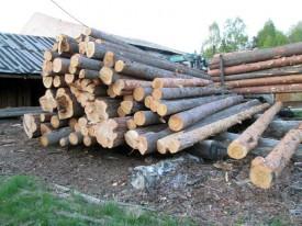 В Кировской области незаконно вырубили леса на 2,500 млн. рублей