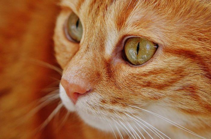 ВКирове выдают котов «начас»