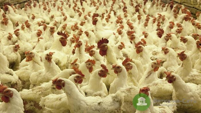 Фаленская птицефабрика задолжала работникам 400 тысяч рублей