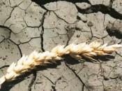 В двух районах Кировской области началась засуха