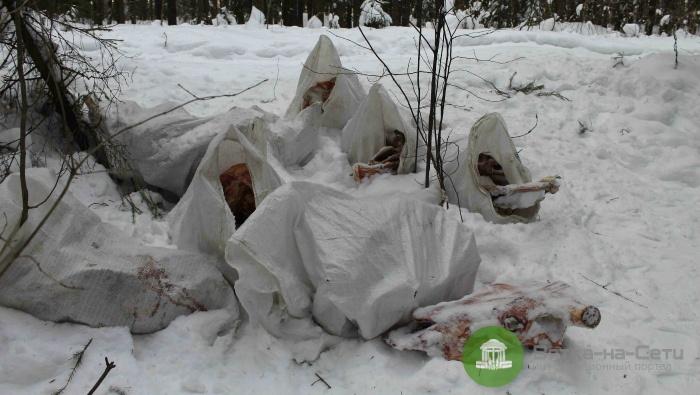 В кировском лесу обнаружена еще одна свалка с останками животных