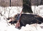 Цена жизни кабана: 50тыс.рублей + снегоход и охотничье ружьё