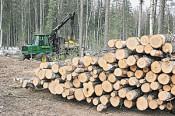 Лесное хозяйство Кировской области: 4.3 млн. штрафов, 186 уголовных дел