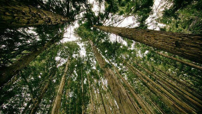 Около 2,1 млрд рублей получит область на улучшение экологической обстановки