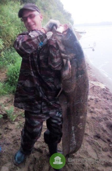 «Малыш сом из Вятки»: кировский рыбак поймал рыбу размером с человека