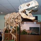 «Вятские динозавры» продолжат сотрудничество с Китаем
