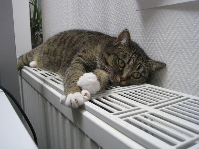 Отопление в Кирове отключат в майские праздники