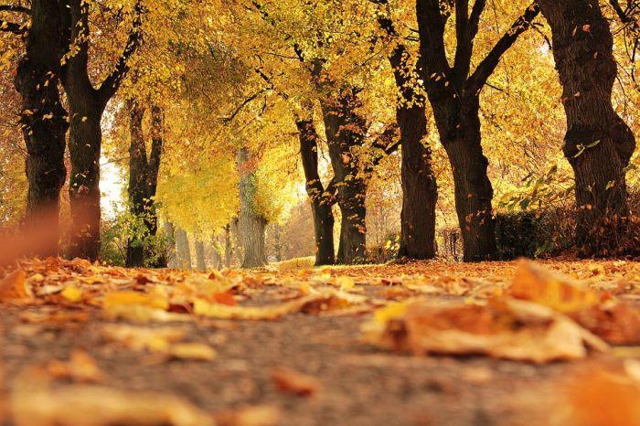 Погода 8 октября