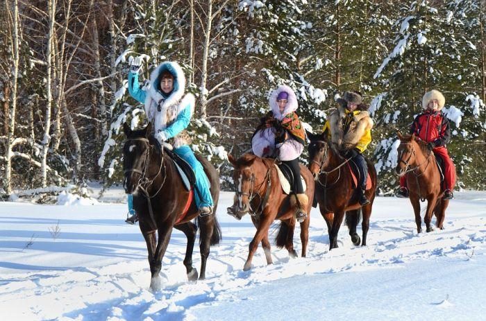 Конные прогулки в Порошино признали незаконными