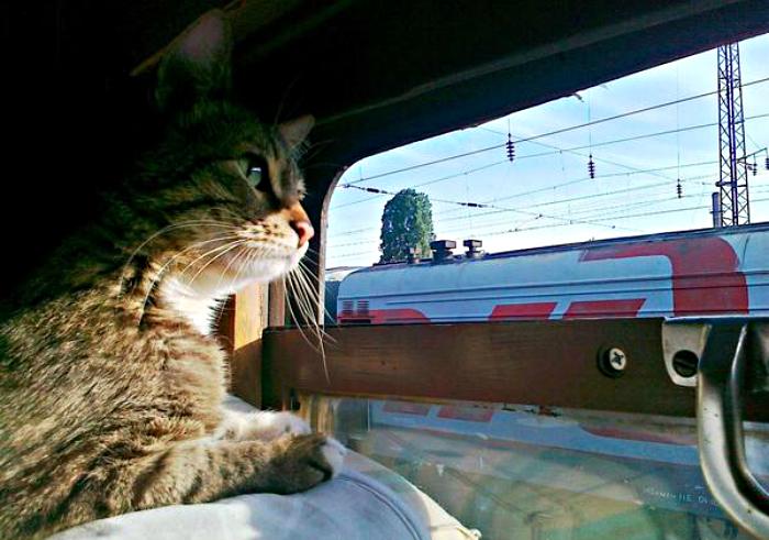 Пассажиры станции Оричи смогут этим летом отправиться в Адлер