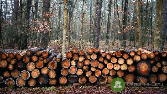 Главу администрации Великорецкого сельского поселения подозревают в незаконной вырубке леса