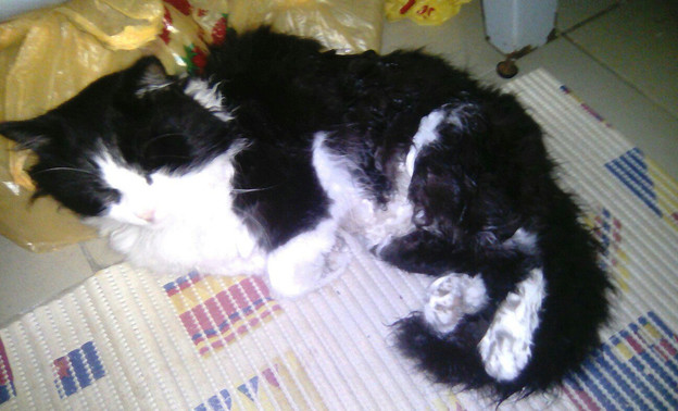 В Котельниче живодер избил кота