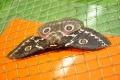 Выставка бабочек в кировской кунсткамере