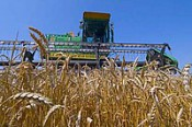 Кировская область ставит «урожайные» рекорды