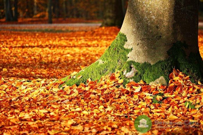 На следующей неделе в Кирове летнее тепло сменится осенним похолоданием