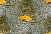 «День знаний» будет холодным и дождливым