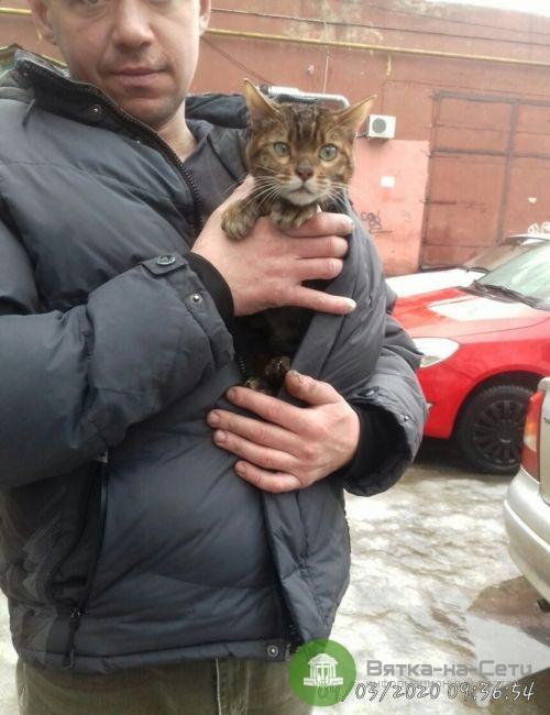 Кировчане откачали пострадавшего при пожаре кота (Видео)