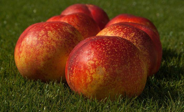 Как оперативно доставить фрукты из Китая?
