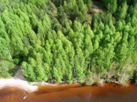 Кировская область получит 45 млн рублей на охрану и защиту лесов