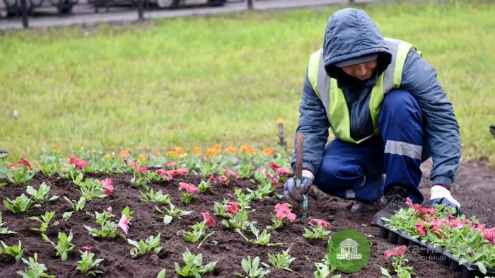 На обустройство цветников в Кирове выделено более 9 млн рублей