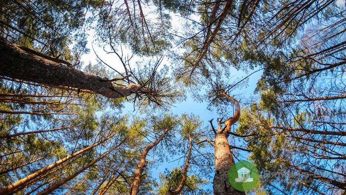 В регионе незаконные свалки и рубки леса ищут с помощью спутников