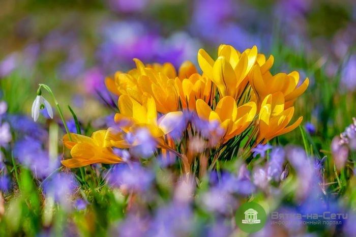 Живые цветы и праздники