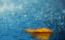 В ближайшие 4 дня на Вятке дождливо