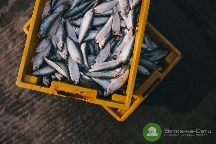 Водным биологическим ресурсам Кировской области нанесен ущерб в 600 тыс. рублей