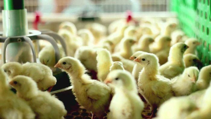 Сотрудники Костинской птицефабрики девять месяцев неполучали заработную плату