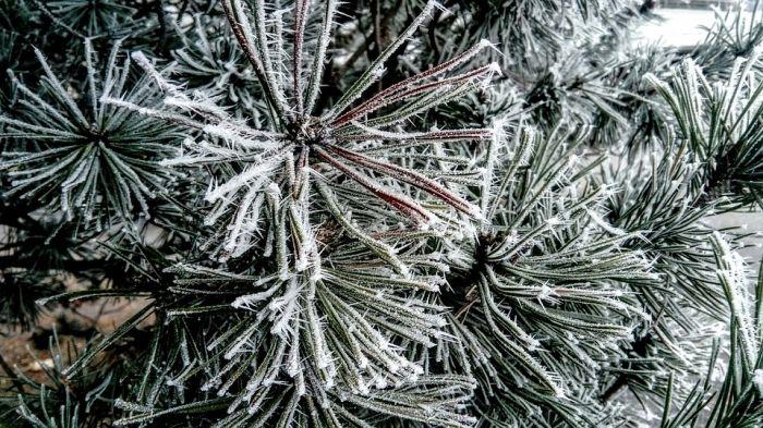 Погода 30 декабря