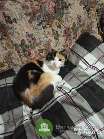 В Кирове продают кошку за миллион рублей
