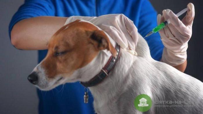 В Кирове проведут бесплатную вакцинацию домашних животных