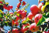 Завтра в Порошино пройдёт Межрегиональный день садовода