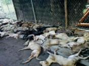Жители Нововятска обнаружили свалку из мертвых собак