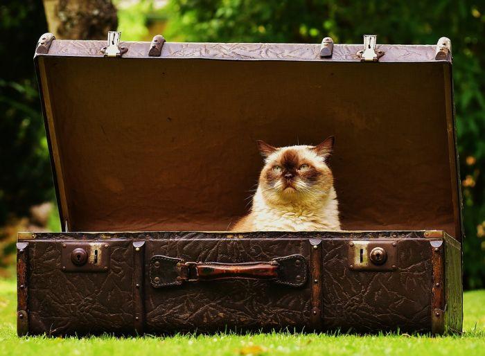 Виды сумок для путешествий