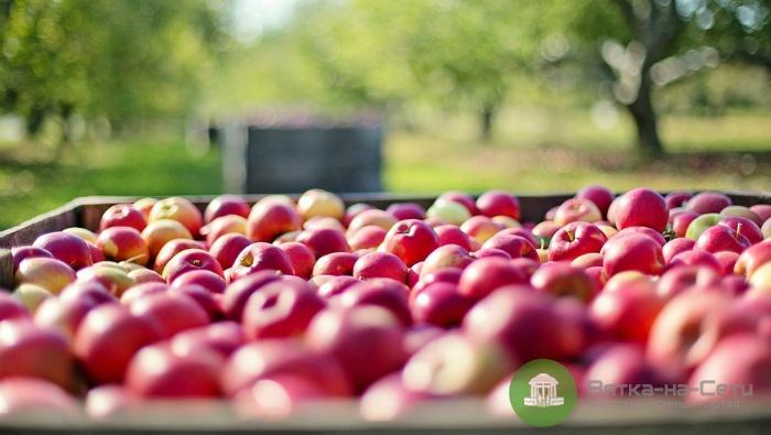 В Кирове раздавили более тонны санкционных фруктов и овощей
