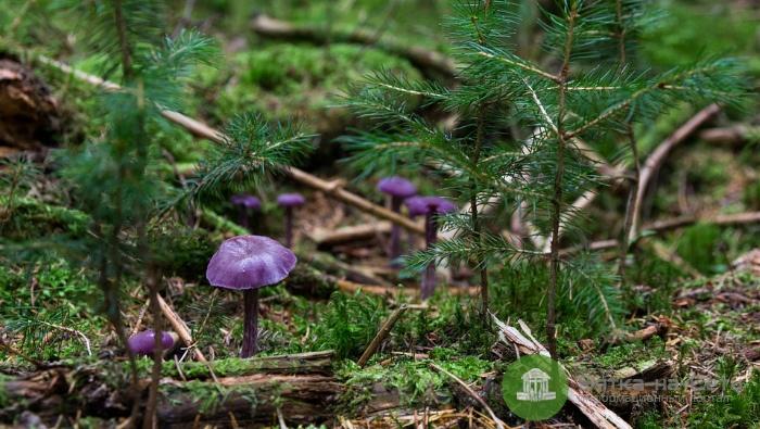 Роспотребнадзор: Пенсионерка из Лебяжья погибла не из-за отравления грибами