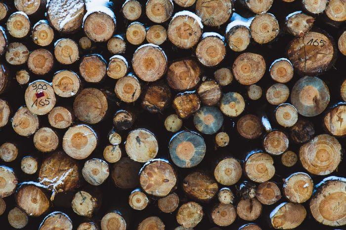 Руководителя опаринской лесной компании оштрафовали иамнистировали