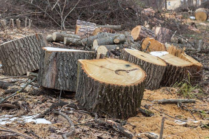 В Шабалинском районе мужчину убило упавшее дерево