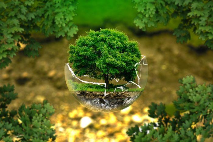 В Кировской области улучшилась экологическая ситуация