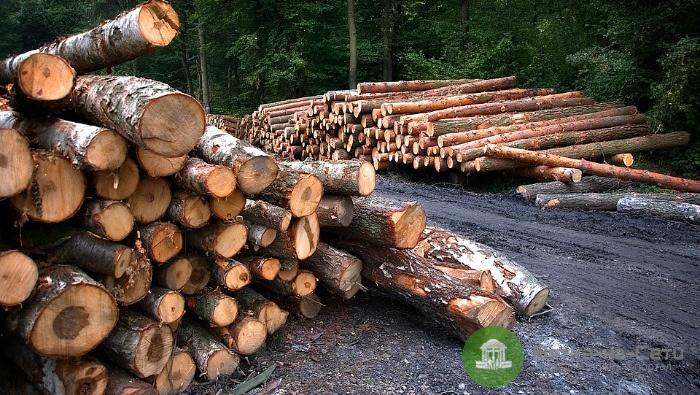 В Кировской области депутат скрыл незаконную рубку леса