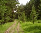 Сколько стоит развести костер в лесу?