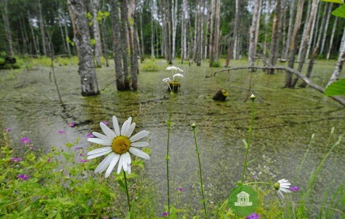 В Омутнинском районе сотрудники УФСИН спасли тонущего в болоте мужчину