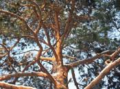 В сквере у «Алых парусов» по ночам незаконно вырубают деревья