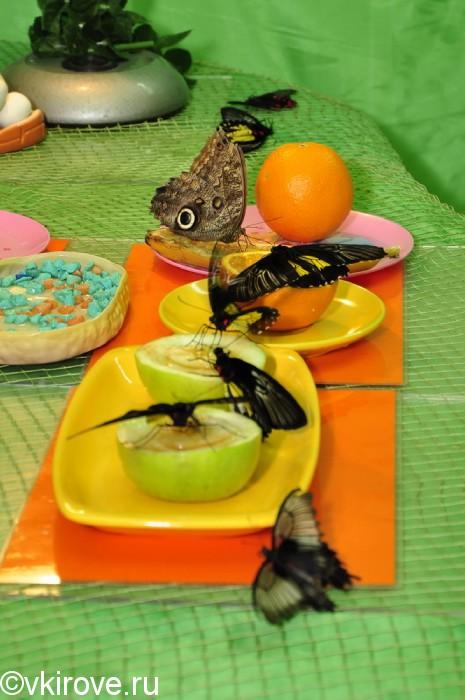 Бабочки в Кирове