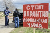 В Киров попало мясо, заражённое чумой?